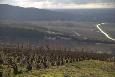 Champagne Vineyards near Epernay