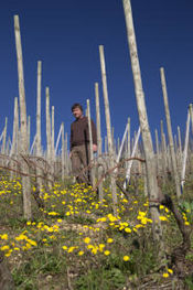 Francois Merlin in Condrieu Vineyards