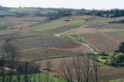 Saint-Veran Vineyards from Leynes