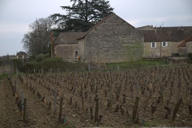 Gerard Boyer Backyard in Meursault