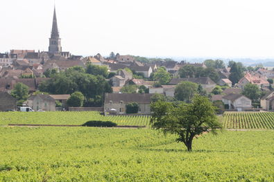 Meursault Vineyards and Village