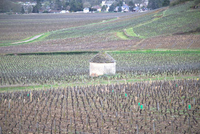 Vineyards in Savigny-les-Beaune