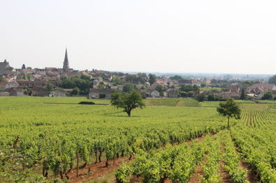 Meursault Village from Vineyards