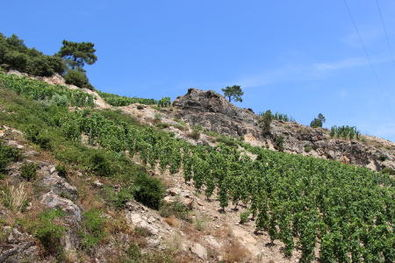 Domaine du Tunnel Stephane Robert Steep Cornas Hillside Vineyards